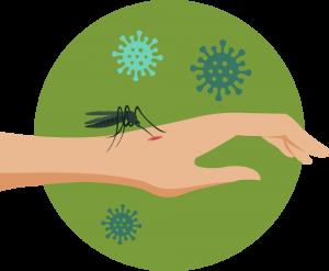 蚊が媒介する感染症